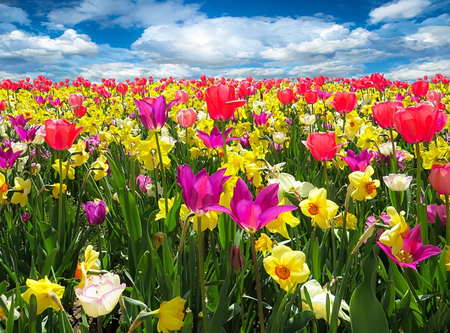A field full of spring flowers.