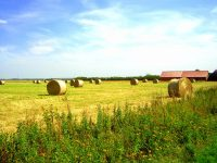 A hay field at harvest time.